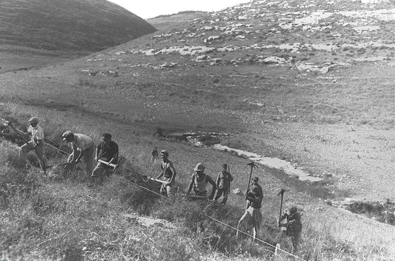 Members of Kibbutz Ein Hashofet Preparing the Soil for Tree Planting in the Ephraim Hills, 1937 Courtesy of Trees for the Holy Land